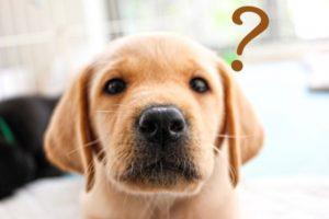 悩む子犬のイメージ